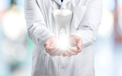 Dentist holding a model of molar.